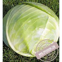 Seminis Арривист F1 (Arrivist) семена капусты белокочанной Seminis, оригинальная упаковка (2500 семян)