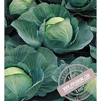 Seminis Атриа F1 (Atria F1) семена капусты белокочанной Seminis, оригинальная упаковка (2500 семян)