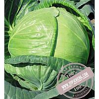 Seminis Тобия F1 (Tobia) семена капусты белокочанной Seminis, оригинальная упаковка (2500 семян)