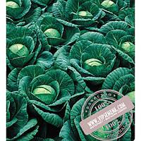Seminis Ринда F1 (Rinda) семена капусты белокочанной Seminis, оригинальная упаковка (2500 семян)