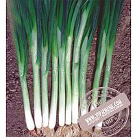 Seminis Грин Баннер (Green Banner) семена лука на перо Seminis, оригинальная упаковка (100000 семян)