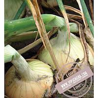 Seminis Балстар F1 (Balstar) семена лука озимого Seminis, оригинальная упаковка (0.5 кг)