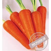 Seminis Абако F1 ǿ 2,0 и более (Abaco) семена моркови типа Шантане Seminis, оригинальная упаковка (1 млн. семян)