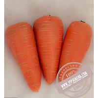 Seminis СВ 3118 ДХ F1 ǿ 1,8-2,0 (SV 3118 DH) семена моркови типа Шантане Seminis, оригинальная упаковка (200000 семян)