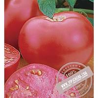 Seminis Пинк Леди F1 (Pink Girl) семена томата Seminis, оригинальная упаковка (500 семян)