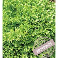 Seminis Фриллис (Frillice) семена салата листового Seminis, оригинальная упаковка (10 грамм)
