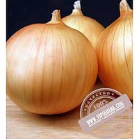 Seminis Экзакта F1 (Exacta) семена лука репчатого Seminis, оригинальная упаковка (250000 семян)