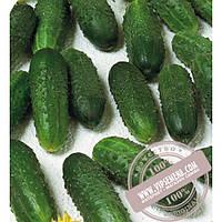 Seminis Marinda F1 (Маринда) семена огурца-корнишона партенокарпического Seminis, оригинальная упаковка (1000 семян)