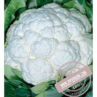 Seminis Фридом F1 (Freedom) семена цветной капусты Seminis, оригинальная упаковка (1000 семян)