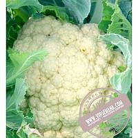 Seminis АБЕНИ F1 (ABENI F1) семена цветной капусты Seminis, оригинальная упаковка (1000 семян)