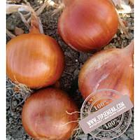 Cora Seeds Сония F1/Sonia (Khalifer) F1 семена лука желтого Cora Seed, оригинальная упаковка (250000 семян)
