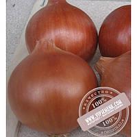 Cora Seeds Эленка F1 (Elenka F1) семена лука желтого Cora Seed, оригинальная упаковка (250000 семян)