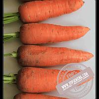 Takii Seeds Танжерина F1 T- 825 (Tangerina F1 T- 825) семена моркови типа Шантане Takii Seeds, оригинальная упаковка (100000 семян)