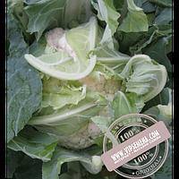 Hazera Рауль F1  (Raul F1) семена цветной капусты Hazera, оригинальная упаковка (2500 семян)