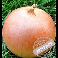 Hazera Стартер F1 (Starter F1) купить семена лука репчатого Hazera, оригинальная упаковка (250000 семян)