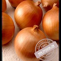 Hazera Франциско F1 (Franzisco F1) купить семена лука репчатого Hazera, оригинальная упаковка (250000 семян)
