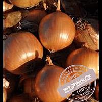 Hazera Дормо F1 (Dormo F1) семена лука репчатого Hazera, оригинальная упаковка (250000 семян)