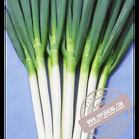 Hazera Карел  (Karel) семена лука на перо Hazera, оригинальная упаковка (50000 семян)