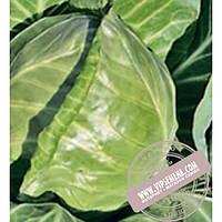 Rijk Zwaan Рейма F1 (Rayma F1) семена капусты белокочанной Rijk Zwaan, оригинальная упаковка (1000 семян, калиброванные)