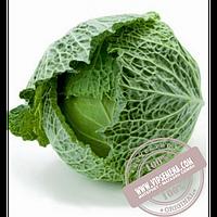 Rijk Zwaan Морама F1 (Morama F1) семена капусты савойской Rijk Zwaan, оригинальная упаковка (1000 семян)