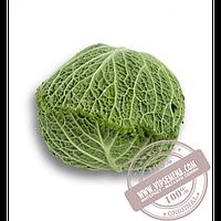 Rijk Zwaan Мадлена F1 (Madlena F1) семена капусты савойской Rijk Zwaan, оригинальная упаковка (2500 семян)