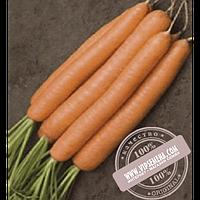 Rijk Zwaan Джерада F1 (Jerada F1) Ǿ 1.8-2.0 семена моркови типа Нантес Rijk Zwaan, оригинальная упаковка (100000)
