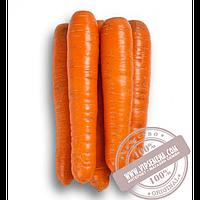 Rijk Zwaan Фидра F1 (Fidra F1) Ǿ 1.6-1.8 семена моркови типа Нантес Rijk Zwaan, оригинальная упаковка (25000 семян)