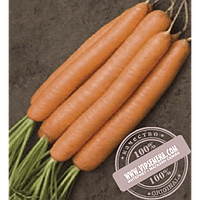 Rijk Zwaan Джерада F1 (Jerada F1) Ǿ 1.8-2.0 семена моркови типа Нантес Rijk Zwaan, оригинальная упаковка (1 млн семян)