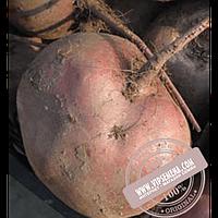 Rijk Zwaan Либеро (Libero) семена свеклы столовой округлой Rijk Zwaan, оригинальная упаковка (100000 семян) PR