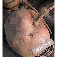 Rijk Zwaan Либеро (Libero) семена свеклы столовой округлой Rijk Zwaan, оригинальная упаковка (25000 семян)