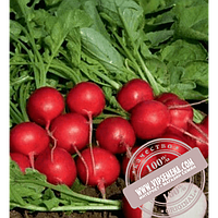 Rijk Zwaan Мондиал F1 (Mondial F1) Ǿ 2.50-2.75 семена редиски Rijk Zwaan, оригинальная упаковка (25000 семян, калиброванные)