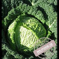 Hazera Серпантин F1 (Serpantin F1) семена капусты савойской Hazera, оригинальная упаковка (2500 семян)