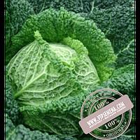 Hazera Турмалин F1 (Turmalin F1) семена капусты савойской Hazera, оригинальная упаковка (2500 семян)