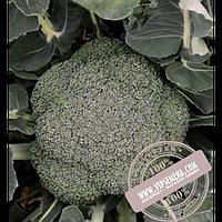 Hazera Стромболи F1 (Stromboli F1) семена капусты брокколи Hazera, оригинальная упаковка (1000 семян)