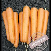 Vilmorin Аттилио F1 (Attilio F1) семена моркови Нантского типа Vilmorin, оригинальная упаковка (100000 семян VD)