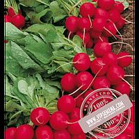 Enza Zaden Селеста F1 (Selesta F1) семена редиса Enza Zaden, оригинальная упаковка (250 грамм)