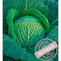 Bejo Вироса F1 (Wirosa F1) семена савойской капусты Bejo, оригинальная упаковка (2500 семян, прецизионные)