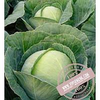 Bejo Тиара F1 (Tiara F1) семена капусты белокочанной Bejo, оригинальная упаковка (2500 семян, сортированные)