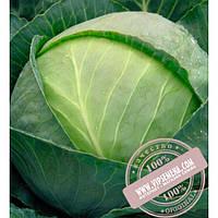 Bejo Томас F1 (Tomas F1) семена капусты белокочанной Bejo, оригинальная упаковка (2500 семян, сортированные)