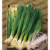 Bejo Параде (Parade) семена лука на перо Bejo, оригинальная упаковка (10000 семян, прецизионные)