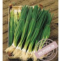 Bejo Параде (Parade) семена лука на перо Bejo, оригинальная упаковка (250000 семян, прецизионные)