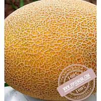 Clause Карамель F1 (Карамель F1) семена дыни, Clause, оригинальная упаковка (1000 семян)