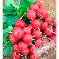 Bejo Ролекс F1 (Rolex F1) Ǿ 2.50-2.75 семена редиса Bejo, оригинальная упаковка (50000 семян-сортированные)