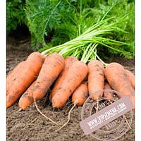 Bejo Карини (Carini) семена моркови тип Флакке Bejo, оригинальная упаковка (500 грамм)