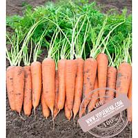 Bejo Вита Лонга (Vita Longa) семена моркови тип Флакке Bejo, оригинальная упаковка (500 грамм)