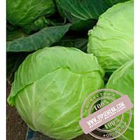 Nunhems Анадоль F1 (Anadol F1) семена капусты белокочанной Nunhems, оригинальная упаковка (2500 семян)