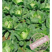 Nunhems Свирель F1 (Svirel F1) семена капусты белокочанной Nunhems, оригинальная упаковка (2500 семян)