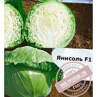 Nunhems Янисоль F1 (Yanisol F1) семена капусты белокочанной Nunhems, оригинальная упаковка (2500 семян)