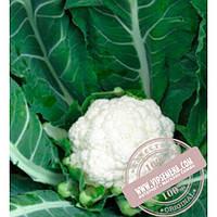 Clause Майбах F1 (Maybah F1) семена цветной капусты Clause, оригинальная упаковка (1000 семян)