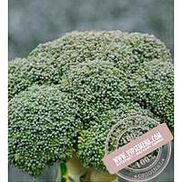 Clause Корос F1 (Koros F1) семена капусты брокколи Clause, оригинальная упаковка (1000 семян)